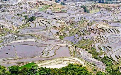 Las terrazas de Yuanyang, maravilla del hombre y la naturaleza